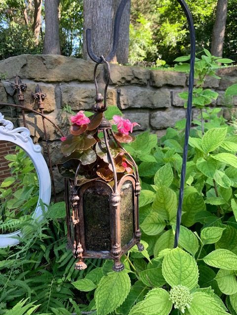 lantern with begonia planted