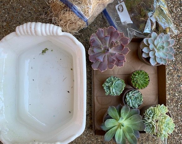 Supplies needed for succulent arrangement