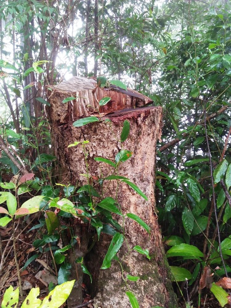 """Thông qua những ứng dụng công nghệ những người """"lính rừng"""" sẽ nhanh chóng phát hiện ra những vụ cháy rừng, các điểm khai thác rừng trái pháp luật. (Ảnh: Vietnam+)"""