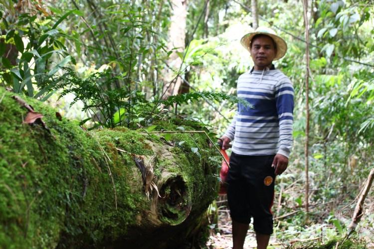 Người dân nhận bảo vệ rừng pơmu ở Tây Giang, tỉnh Quảng Nam. (Ảnh: Vietnam+)