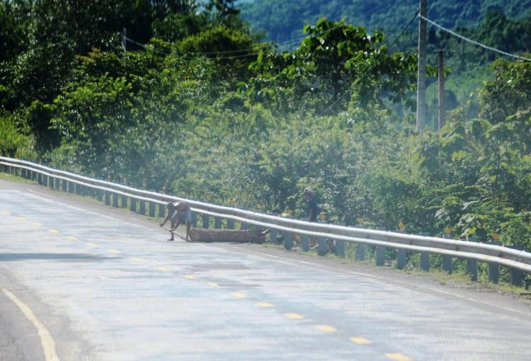 Lâm tặc ngang nhiên tẩu tán những khúc gỗ lớn ra khỏi rừng tại khu vực huyện Nam Giang, tỉnh Quảng Nam trong tháng 8/2018. (Ảnh: Vietnam+)