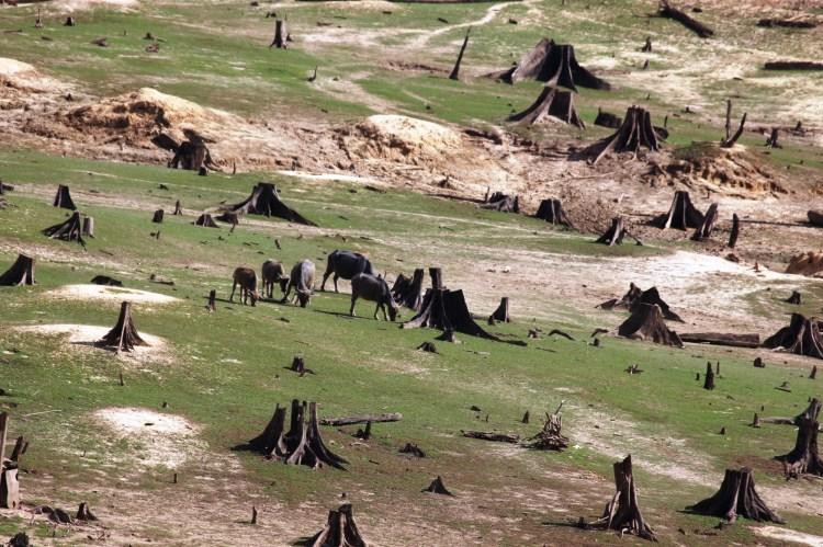 """Đại ngàn xanh ngút ngát đã bị thủy điện """"nuốt chửng,"""" hàng ngàn cây cổ thụ đốn hạ và chôn vùi vào đáy nước vô tình. (Ảnh: Vietnam+)"""