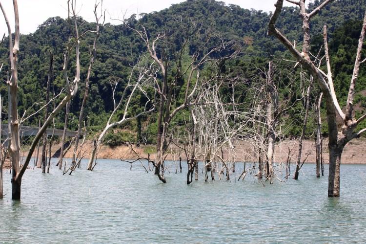 Thủy điện-visus ung thư giết hại rừng. (Ảnh: Vietnam+)