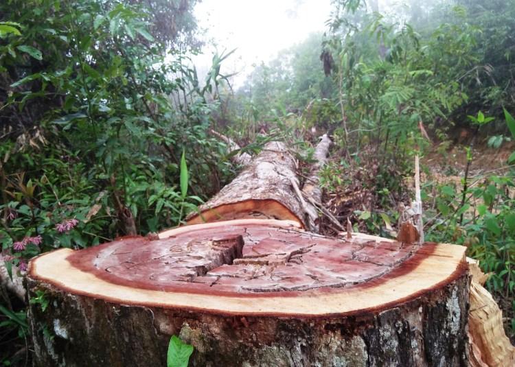 Theo thống kê của Tổng cục Lâm nghiệp (Bộ Nông nghiệp và Phát triển nông thôn), từ năm 2012 đến 2017, diện tích rừng mất do chuyển đổi đất rừng làm thủy điện chiếm khoảng 68,2%.(Ảnh: Hùng Võ/Vietnam+)