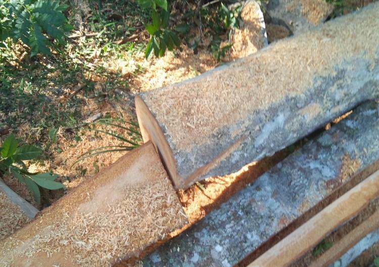 Một vụ phá rừng xảy ra tại khu vực đã được giao cho chính quyền xã Hiếu, huyện Kon Plông, tỉnh Kon Tum quản lý. (Ảnh: Vietnam+)