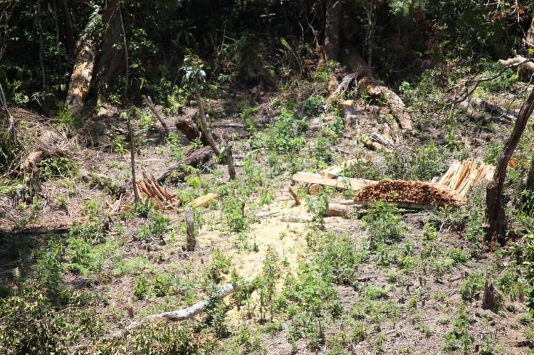 Tình trạng mất rừng, lấn chiếm rừng, khai thác rừng trái pháp luật xảy ra ở nhiều nơi tại tỉnh Kon Tum. (Ảnh: Vietnam+)