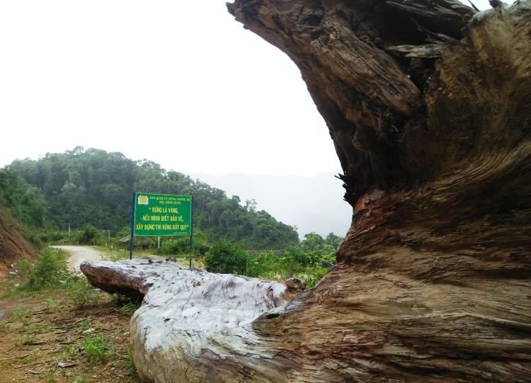 """Bác Hồ từng nói: """"Rừng là vàng, nếu biết bảo vệ, xây dựng thì rừng rất tốt."""" (Ảnh: Vietnam+)"""