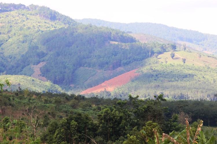Trong khi rừng tự nhiên đang bị phá thì diện tích rừng trồng thời gian qua dù có tăng nhưng chất lượng gỗ rừng vẫn còn thấp (theo kết quả công bố hiện trạng rừng toàn quốc năm 2017).(Ảnh: Vietnam+)