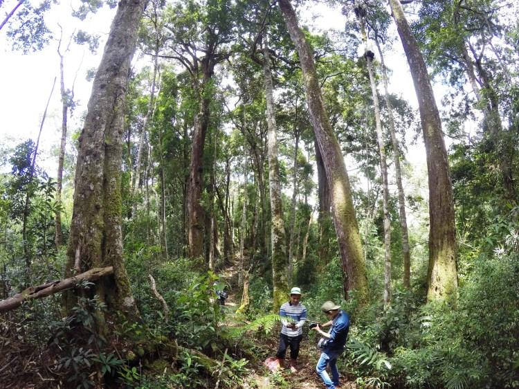 """Từ năm 2011, khi Chính sách chi trả dịch vụ môi trường rừng được triển khai, đây là một trong những biện pháp hữu hiệu lâu dài để người dân gắn bó với rừng và """"sống"""" được nhờ rừng. (Ảnh: Vietnam+)"""