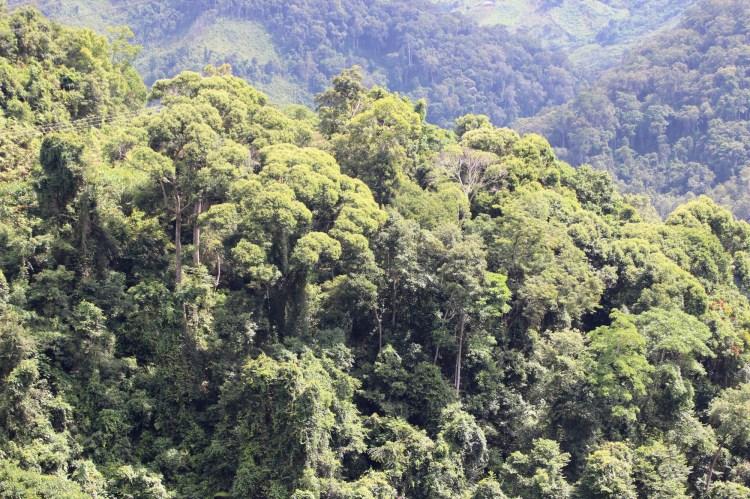 Hơn 7,1 triệu lô rừng đã được cán bộ của các hạt kiểm lâm cấp huyện thu thập thủ công hằng năm. (Ảnh: Vietnam+)