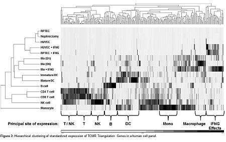 Molecular Landscape of T Cell-Mediated Rejection: The T