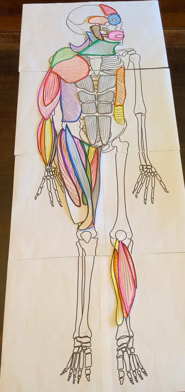 3d learning in anatomy i m hooked  [ 640 x 1354 Pixel ]
