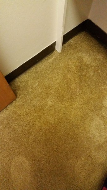 carpet bleach correction lawton ok