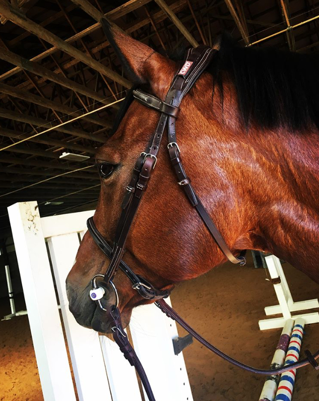 Review of Trust Equestrian Part 2 – A Techie Equestrian