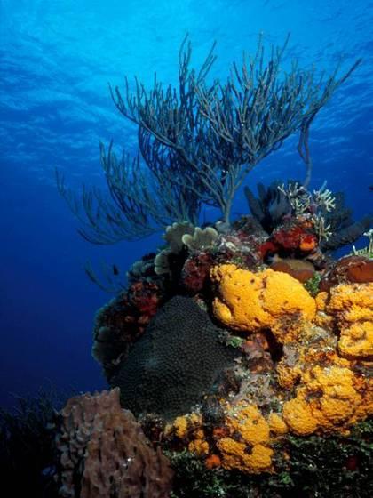 Recifes de Corais em Cozumel