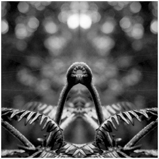 © Torsten Gripp | 2019 | La Gomera - Waldbewohner