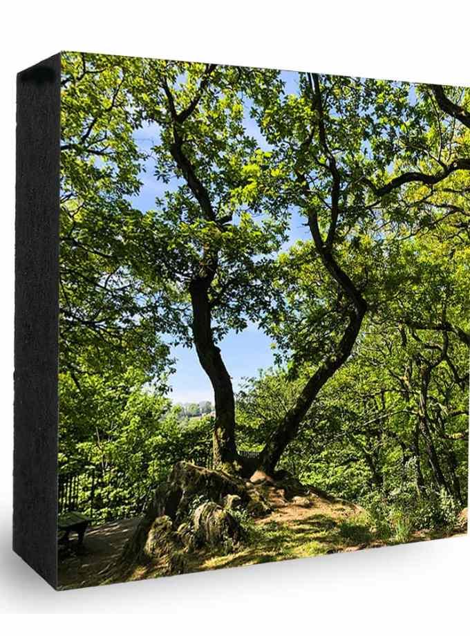 Falkenstein Kocherfels Wald