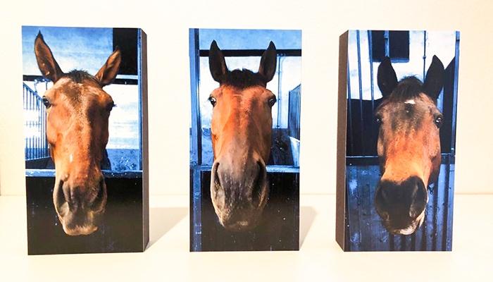 Pferde Bilder auf Holz