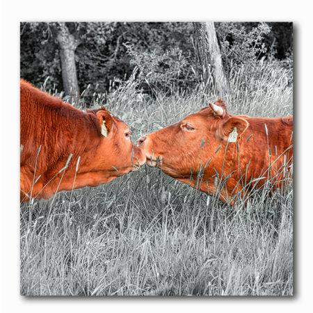 Kuh Kuss Bild auf Holz