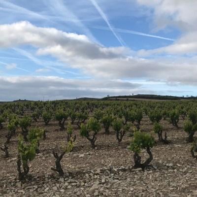 Camino Torres del Rio ワイン畑