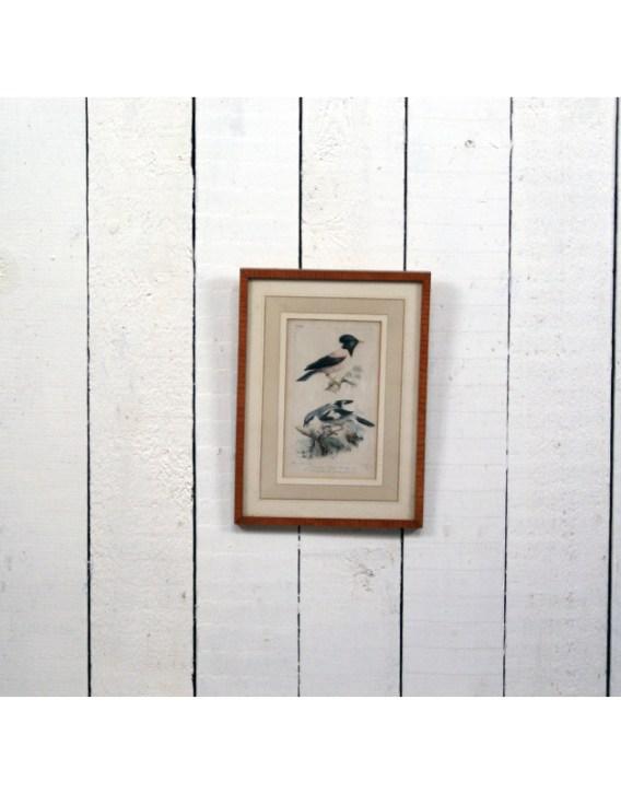 cadre-oiseau