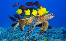 turtle-yellow-fish-underwater-ocean-awesome_412398