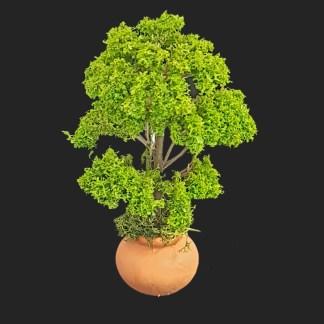 arbre 12 cm vert clair –  Aubagne -provence – santon de provence -santon – décors de provence – décors de crèche – crèches de Provence- accessoire de Provence -artisan – made in france – france