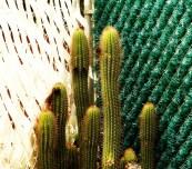 Cactus © Louis Armand