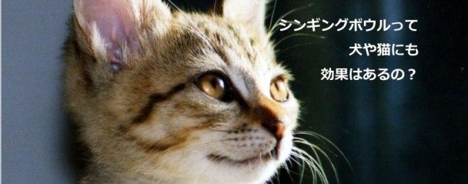 シンギングボウルって犬や猫にも効果があるの?