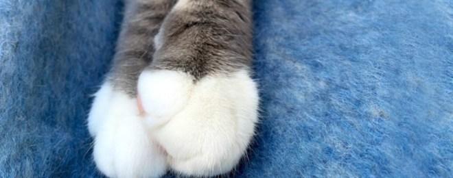 靴下をはいた猫