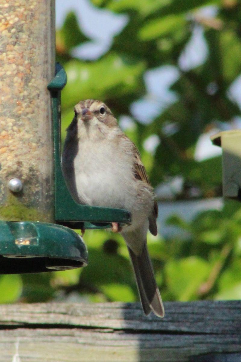 Biodiversité : protéger les oiseaux de nos jardins post thumbnail image