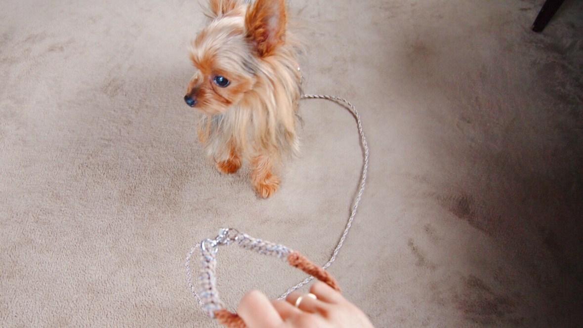 犬、リード、オーダー、小型、オリジナル、かわいい、革、パラコード