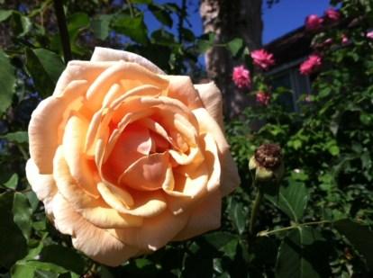 Mom daughter roses