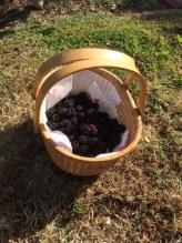 Fresh blackberries, so worth it!