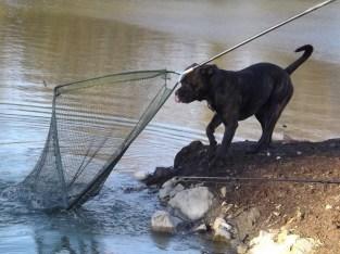 'Yeah mannnnn, fish IN THE net'