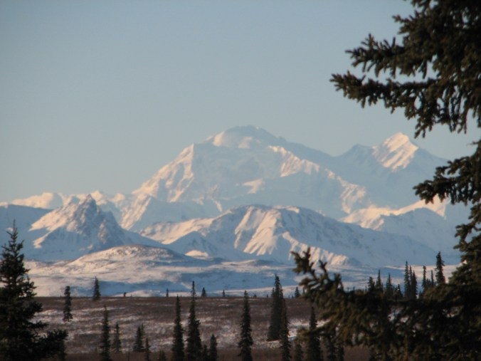 Denali. Photo by Angela Gonzalez