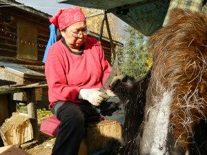 Eleanor Yatlin scrapes a moose hide. Photo by Angela Gonzalez