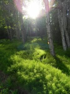 A grassy wooded area in Alaska by Angela Gonzalez