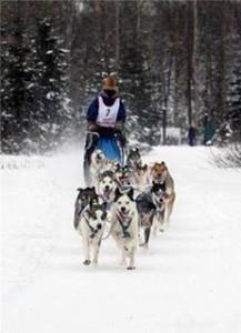 Courtney Agnes with dog team 2014