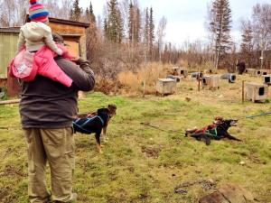 Taking care of and training a dog team is a year-round business. Courtney Agnes and her family take the dogs on a summer run. Courtesy photo