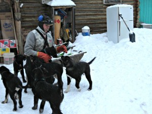 Nikolai Dog Musher John Runkle with pups. Photo by Amy Modig