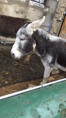Little Donkey.