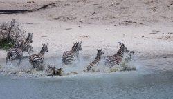 Safari Day 1-10