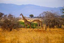 Safari Day 1-102