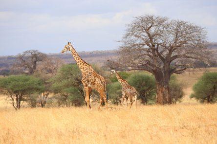 Safari Day 1-104