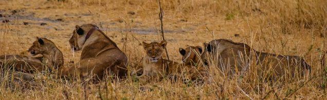 Safari Day 1-126