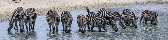 Safari Day 1-16