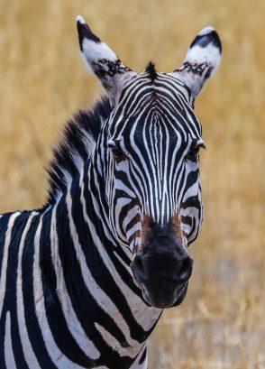 Safari Day 1-43