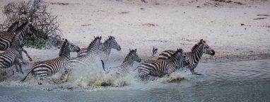 Safari Day 1-8