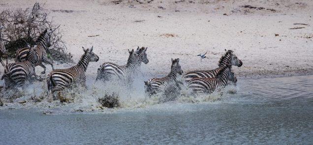 Safari Day 1-9